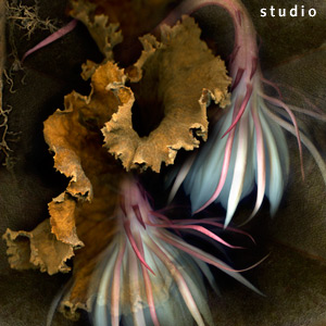 Night Blooming Cereus - photo collage from multiple scans of original objects scannography fine art photograph by photographer Kim Kauffman