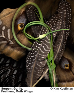 Serpent Garlic Feathers and Moth Wings photograph by photographer Kim Kauffman