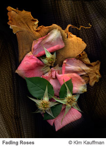 Clematis and Magnolia Leaves by Kim Kauffman from the Florilegium series
