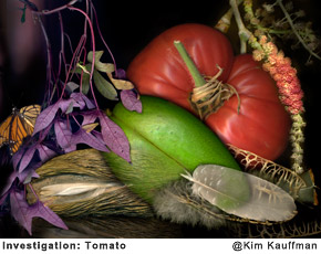 Investigation-Tomato photo collage made from multiple scans of original objects by Kim Kauffman