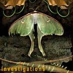Investigations: Luna Moth photograph collage from multiple scans of original objects by Kim Kauffman
